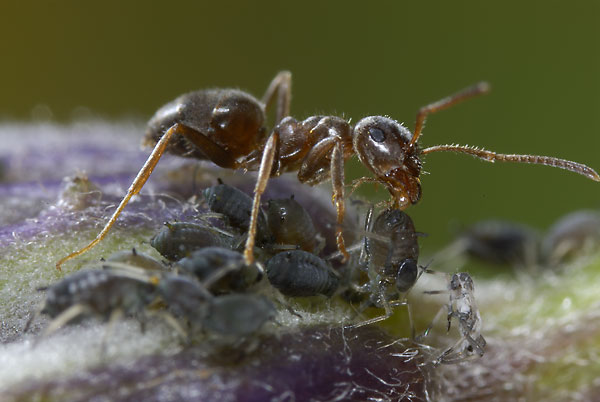 Spüren Insekten Schmerz