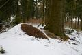 Waldameisenhügel im Winter